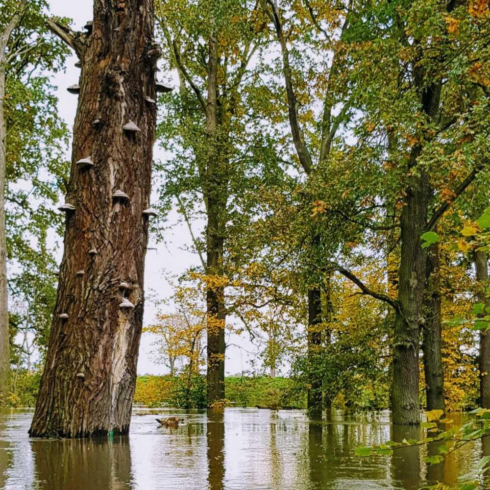 Spływ kajakowy Odrą i lasem