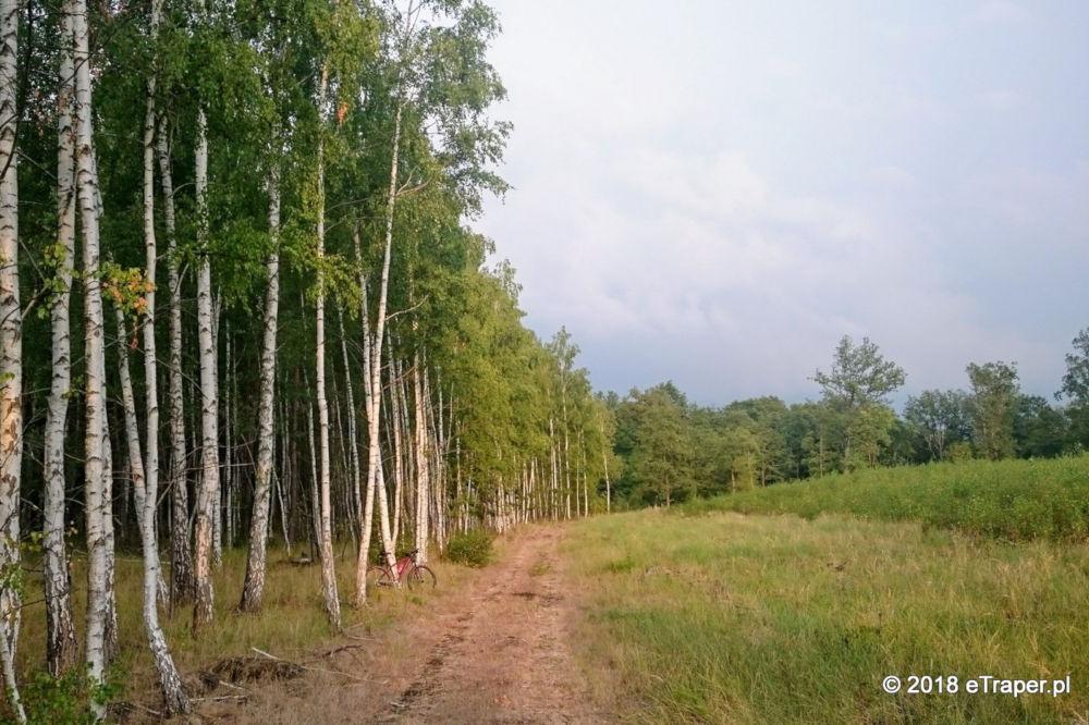 Leśna droga w okolicach Przyborowa